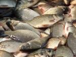 рыболовный фестиваль поплавок озеро Подсопки клюёт караси
